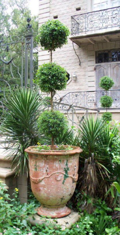 garden-11 in  circa